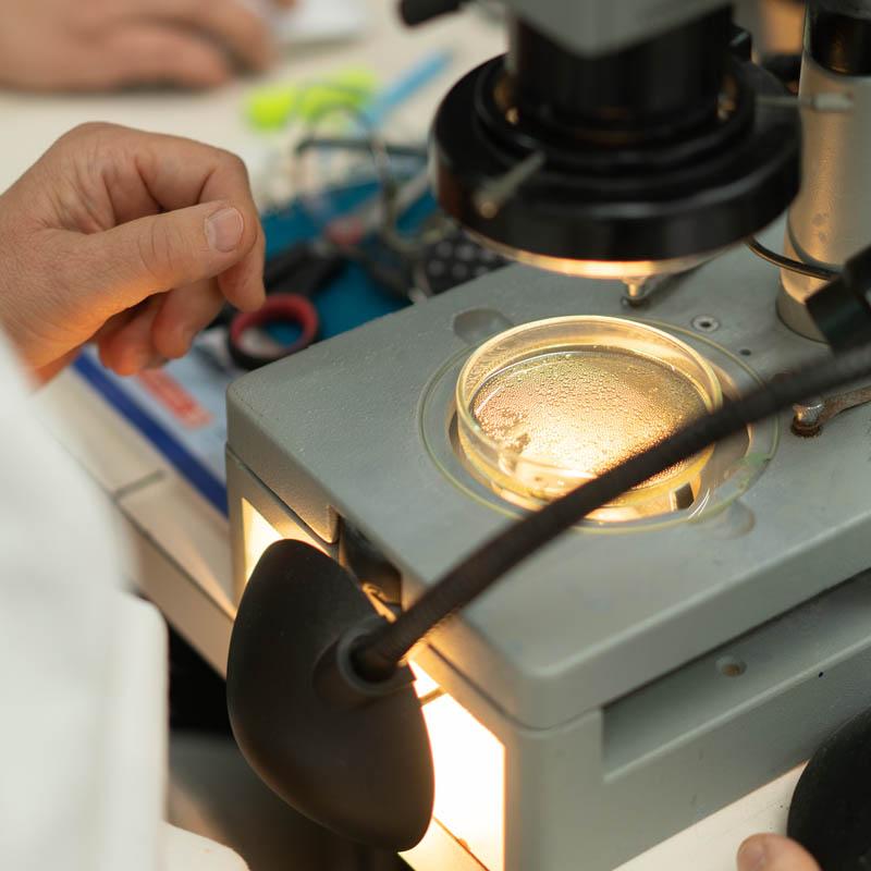 Dienstleistungen Harzuntersuchungen Mikroskop
